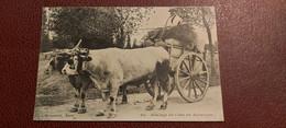 Ancienne Carte Postale - Attelage De Char En Auvergne - Other Municipalities