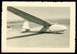 Photo Dentelée - ALGERIE - Avion - Planeur - 9 X 6,5 Cm - Aviation