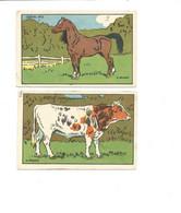 Chromo Cheval Vache Didactique 100 X 60 Mm Bien 2 Scans - Other