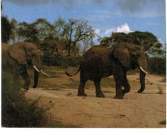 Lot   - Thème - Animaux -  éléphant -   Environ 90 Cartes - 5 - 99 Postkaarten