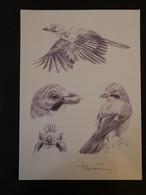 Buzin Tekening A4 Vlaamse Gaai - 1985-.. Birds (Buzin)