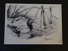 Buzin Tekening A4 Tafeleend - 1985-.. Birds (Buzin)