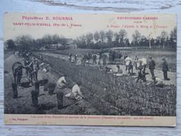 CPA (66) Pyrénées Orientales - Pépinières E. SOURNIA Saint Féliu D'Avall - Vue Prise Au Moment De La Plantation - Altri Comuni