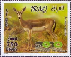 Iraq - Persian Gazelle - Year Of Biodiversity, Stamp, MINT, 2010 - Game