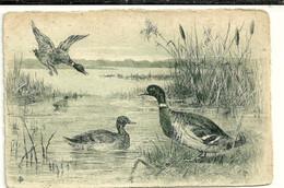 Oiseaux Eau Forte Canards Eiders Ende - Vogels