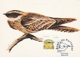Portugal & Maximum Card, Birds, Red-necked Noitibó, Caprimulgus Ruficollis, Faro 2002 (27888) - Maximum Cards & Covers