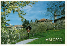 MALOSCO PERFETTA VIAGGIATA - Trento