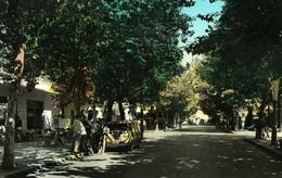 MIRAMARE DI RIMINI VIALE OLIVETI VIAGGIATA 1960 - Rimini