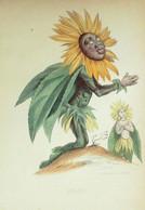 GRANVILLE-Fleurs Animées-SOLEIL-1847 - Lithographies