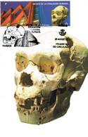CRÁNEO 5 / AT 700. ATAPUERCA. BURGOS. - Archaeology