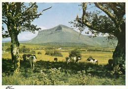 CPSM Ben Bulben Mountain From Bundoran Road,Sligo   L623 - Donegal