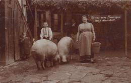 NUSSDORF , Wien ---  Heurigen , Schweine  , Pigs  , Cochons - Other
