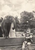 Prag Praha - Zoo , Elephant , Robot - Tchéquie