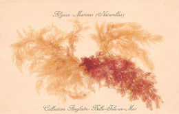 CPA Algues Marines Naturelles - Collection Anglade Belle-Isle-en-Mer - Belle Ile En Mer