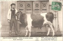 Dépt 56 - PONTIVY - Vente De Vaches Bretonnes : BOT, Vétérinaire, Officier Du Mérite Agricole - Pontivy