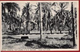 MOZAMBIQUE - MACUSE - PALMAR DA COMPANHIA DO BOROR - 1920 PC - Mozambique