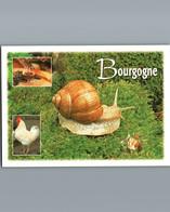 Souvenir De Bourgogne - Cpm - 3 Vues Avec Bel Escargot De Bourgogne - Bourgogne