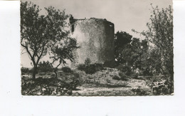 CPSM PF - St Cyr Sur Mer, Vieux Moulin à Vent De St Côme - Saint-Cyr-sur-Mer