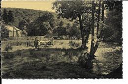 MIRWART   Vallée De La Lhomme Scène Champêtre Au Bord De La Sauvage Rivière Près Du Vieux Moulin,,, Carte Photo. - Saint-Hubert