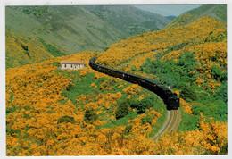NUOVA  ZELANDA      TREIN- ZUG- TRAIN- TRENI- GARE- BAHNHOF- STATION- STAZIONI  2 SCAN   (NUOVA) - Trenes