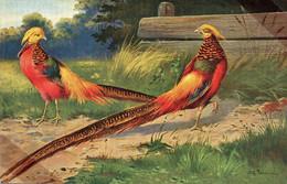 DC554 - Ak Schöne Motivkarte Vogel Goldfasane Fasan - Vögel