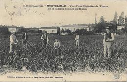 MONTELIMAR Vue D' Une Pépinière De Vignes De La Maison Bonnet De MACON - Montelimar