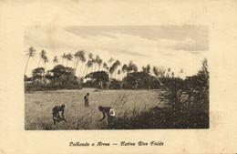 PC CPA MOZAMBIQUE, NATIVE RICE FIELDS, Vintage Postcard (b24875) - Mozambique