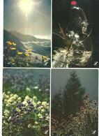 """Lot 10   CPM """"Prestige""""  Fleurs Sauvages De Montagne    Divers Photographes  Voir Scans - Altri Fotografi"""
