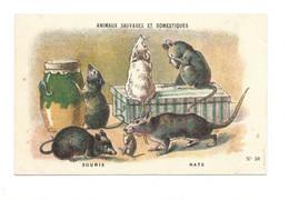 Chromo Souris Rats Diactique Au Dos 110 X 70 Mm Sans Pub. Bien  2 Scans - Tea & Coffee Manufacturers