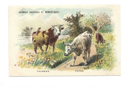 Chromo Taureau Vache Diactique Au Dos 110 X 70 Mm Sans Pub. Bien  2 Scans - Tea & Coffee Manufacturers