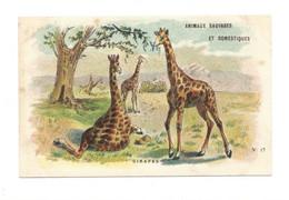 Chromo Girafes Giraffes Diactique Au Dos 110 X 70 Mm Sans Pub. Bien  2 Scans - Tea & Coffee Manufacturers