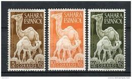Sahara 1951. Edifil 91-93 ** MNH. - Sahara Espagnol