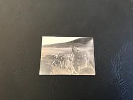 Photo - 1921 - GRIS NEZ (Pas De Calais) Famille Plage - Lieux