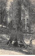 JURA Touriste - Forêt De Joux - Le Président - Très Bon état - Otros Municipios