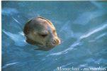 Postcard , Greece, Animals, Seal, Monachus Monachus - Andere
