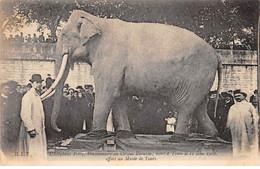 TOURS - L'Eléphant Fritz, Morts à Tours Le 11 Juin 1902 - Très Bon état - Tours