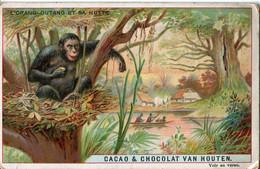 Chromos .n° 23376. Cacao Et Chocolat Van Houten. L Orang Outang Et Sa Hutte . - Van Houten