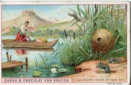 Chromos .n° 23377. Cacao Et Chocolat Van Houten. La Souris Naine Et Son Nid . - Van Houten
