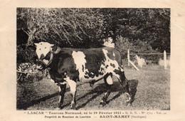 """"""" LASCAR """" Taureau Normand - Propriété De Monsieur De Laurière à SAINT MAMET . Vente Annuelle De FOURNILS 10 Aout 1924. - Otros Municipios"""