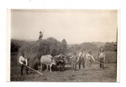 """Meillon. Fenaison A La """"Glandée"""",vaches Bearnaises ,carte Photo 1925 + 4 Photos Scenes Champetres. - Andere Gemeenten"""