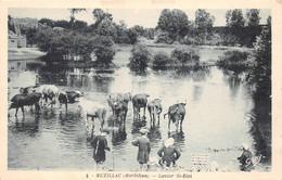 ¤¤  -  MUZILLAC  -  Lavoir Saint-Eloi  -  Lavendières, Laveuses  -   Vaches  -  ¤¤ - Muzillac