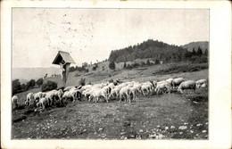 SLOVENIA OLD  POSTCARD - Slovenia
