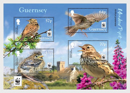 Guernsey 2017 MS - WWF: Endangered Species Meadow Pipit - Guernsey