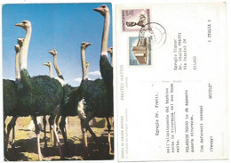 Dear Doctor Pelargon Rosso Nestlè Color Pcard South West Africa 20mar1964 - Advertising
