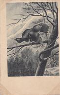 Chasse, Hunting Hunter Animaux  Auerhahn  Korhoen  Grouse  Oiseau  Geflügel  Illustrateur  Old  Cpa Ca. 1900 - Caccia