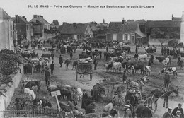 LE MANS - Foire Aux Oignons - Marché Aux Bestiaux Sur Le Patis St-Lazare - Le Mans