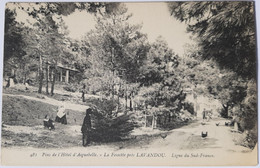 481 Pins De L'Hôtel D'Aiguebelle - La Fossette Près LAVANDOU - Le Lavandou