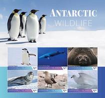 Marshall Islands 2020    Fauna Antarctic Wildlife Penguin ,   Whale ,seal ,birds  I202104 - Marshall Islands