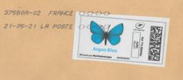 Common Blue Butterfly Papillon Polyommatus Icarus Azuré Commun Azuré De La Bugrane Schmetterling Hauhechel-Bläuling - Schmetterlinge