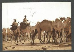 SUDAN - HERDING CAMELS - Sudan